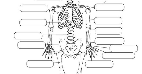 human anatomy worksheet designed by lucid publishing halloween best tpt creations from pre k. Black Bedroom Furniture Sets. Home Design Ideas