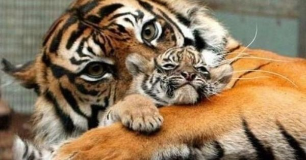Baby animals with their mothers