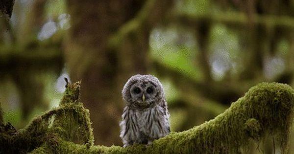 Cute little owl in a pretty tree!