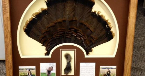 Military Memories And More Turkey Fan Shadow Box Display