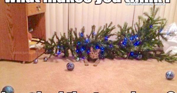 Who Knocked Over The Christmas Tree Christmas Cats Meowy Christmas War On Christmas