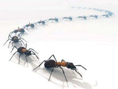 Des pi ges fourmis 100 bio eco ecolo pour cologie for Anti fourmi jardin