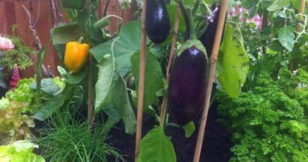 potager plantes fruitiers aromates pour balcon et terrasse jardins fils et id es. Black Bedroom Furniture Sets. Home Design Ideas