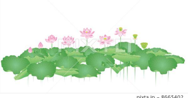 蓮 おしゃれまとめの人気アイデア Pinterest Lotusbuddy 蓮の花 イラスト ハスの花