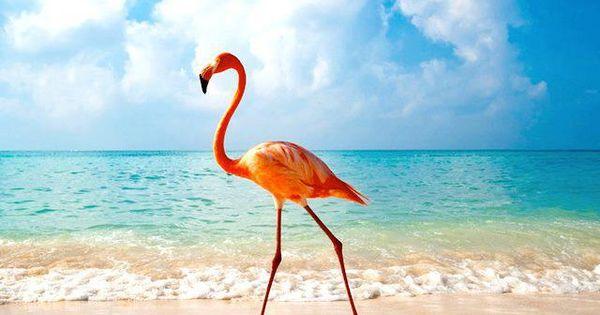 National Bird Flamingo Bahamas We Dnt Jus Fly Here