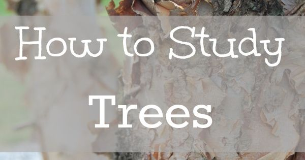 How to Study Trees - tips of how to easy learn to