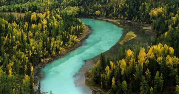 A river amidst a forest, Xinjiang, China