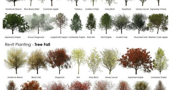 Guide to trees and shrubs - Handy list of names and pictures