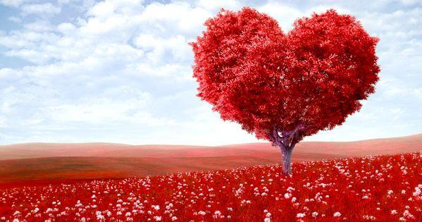 paisajes de amor eterno imagenes hermosas fotos enamorados arbol fondos wallpaper hermoso pinterest paisajes bakgrunder och amor