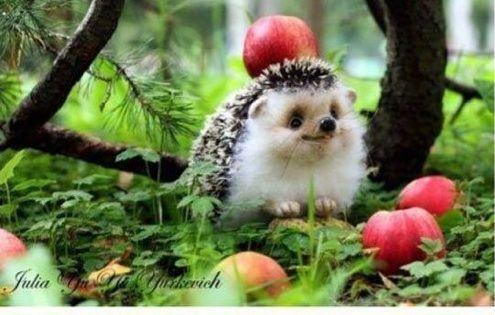 Happy hedgehog. This is a stuffed animal.