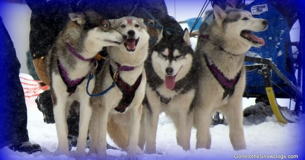 Kalkaska Dog Training