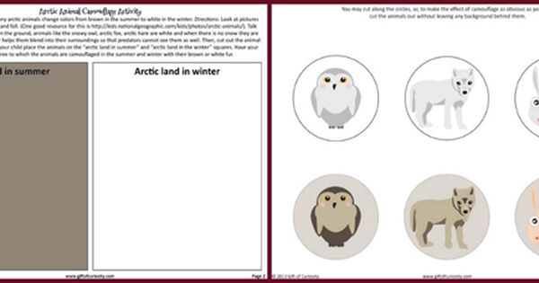 Arctic Animals Camouflage Activity Arctic Animals Camouflage Activities Polar Animals Preschool
