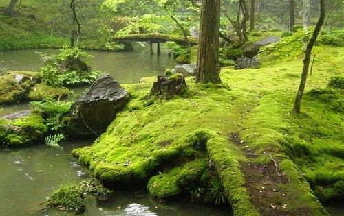 Moss covered bridge, Kyoto, Japan. The temple, which is famed for its