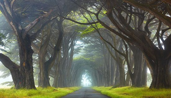 (places I'd like to go BACK to) Mist - Point Reyes National