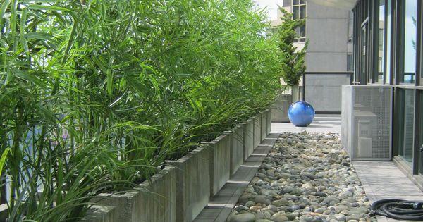 Un mur de bambous en jardini res effet b ton am nagement - Bambous en jardiniere ...