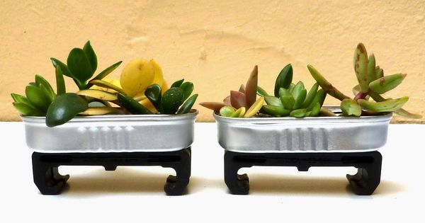 Miniature succulent planters made of recycled materials for Jardin 8686