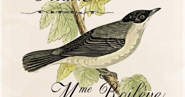 post card   Birds, Bees, and Butterflies   Pinterest   Posts ...