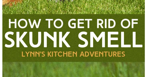 getting rid of skunk smell can be as simple as using a few