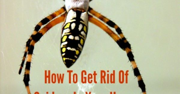 how to get rid of wolf spiders in your house