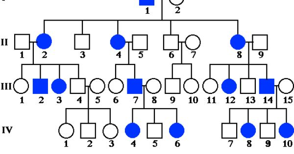 Pin On Genetics Unit 4