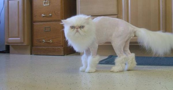 24 Cats That Really Deserve an Apology | Pleated-Jeans.com