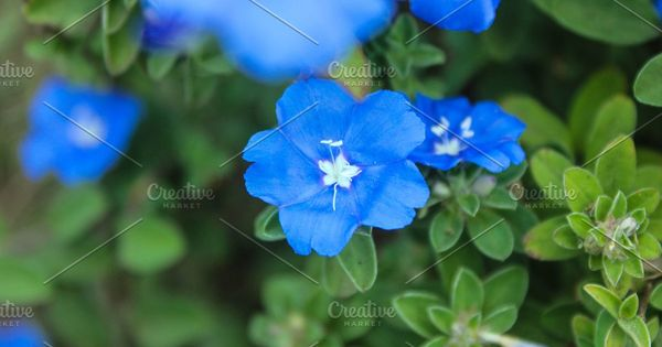 Old Indonesian Coins In 2020 Blue Flower Photos Blue Flowers Nature Photos