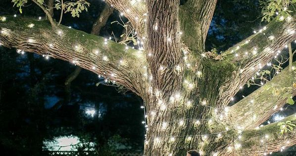 Moonlight Pennsylvania Wedding Under a Sparkling Tree at Aldie Mansion from Emily Wren. - wedding ceremony
