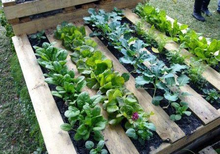 Easy herb garden idea with an old pallet