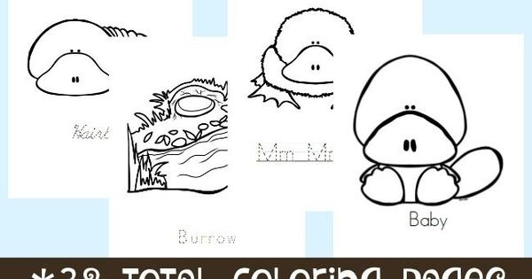 Platypus Life Cycle Coloring Pages Platypus and Homeschool
