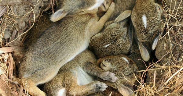 aww, I miss having baby bunnies