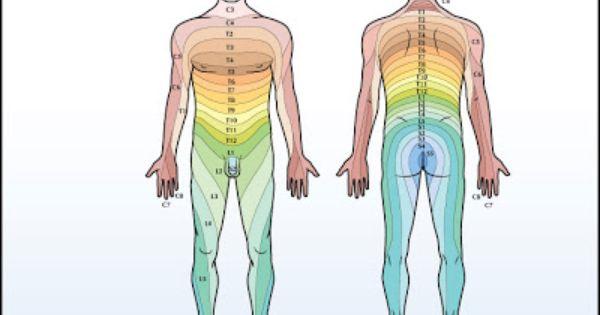 Dermatomes Of The Body La Sports Acupuncture