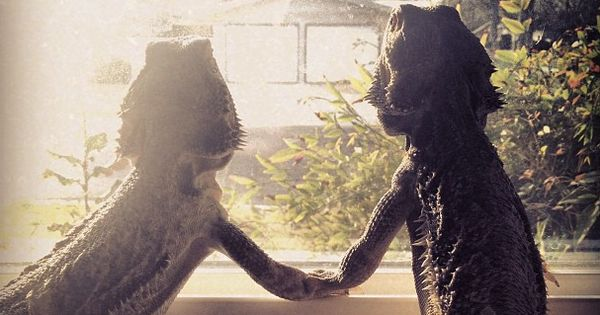 """""""I think this will be the beginning of a beautiful friendship."""""""