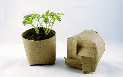 Seed starting in toilet paper rolls! Perfect! Great idea! Then just plant