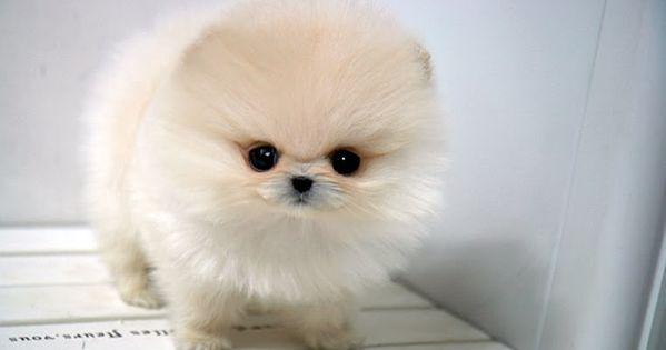 Dog or fur ball?