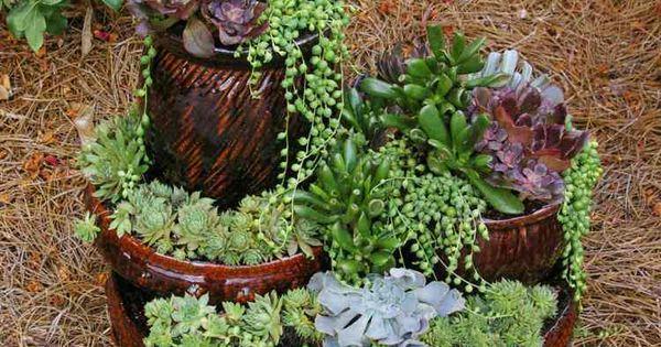 plantes succulentes dans un mini jardin d coratif compo plantes grasses pinterest mini. Black Bedroom Furniture Sets. Home Design Ideas