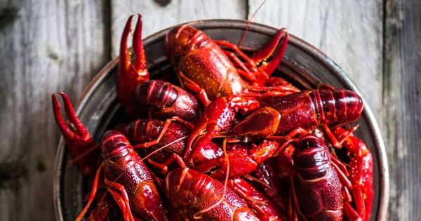 How To Reheat Crawfish In 3 Different Ways Recipe In 2020 Crawfish How To Dry Oregano Pickling Spice