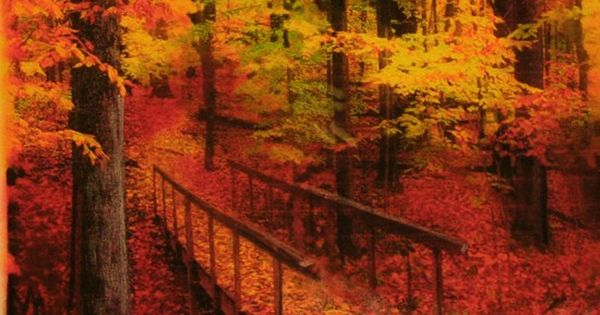 Autumn Footbridge---This has to be the most BEAUTIFUL autumn picture captured ever!!