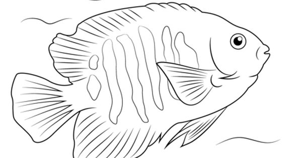 Flame Angelfish Coloring Page From Angelfish Category Select From 21651 Fish Coloring Page Animal Coloring Pages Fish Drawings