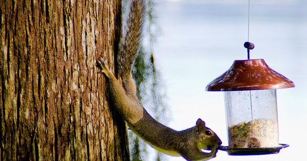 Yoga Squirrel- I think I've seen this guy in my backyard!