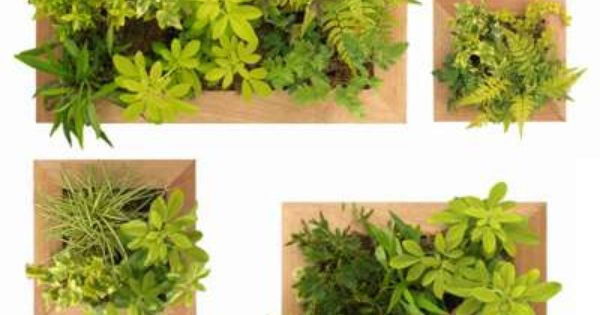 jardin vertical int rieur vertical garden pinterest venado jard n vertical y jardines. Black Bedroom Furniture Sets. Home Design Ideas