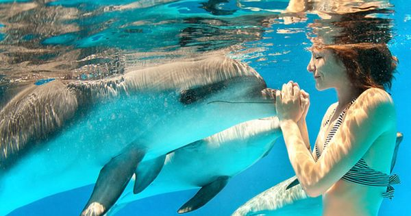 Bucket list: travel somewhere tropical to swim with dolphins! BucketList