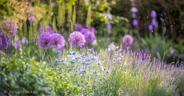 Pflegeleichte Staudenbeete Pflegeleichter Garten Pflegeleichter Garten Mehrjahrige Pflanzen Staudenbeet