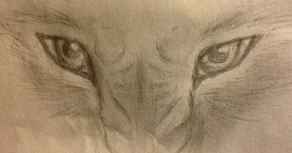 Angry Eyes Drawing Angry Wolf Drawing Images Eye Drawing Wolf