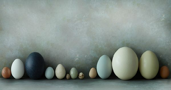 All shapes, sizes, & colors of eggs. The dark blue one is ...