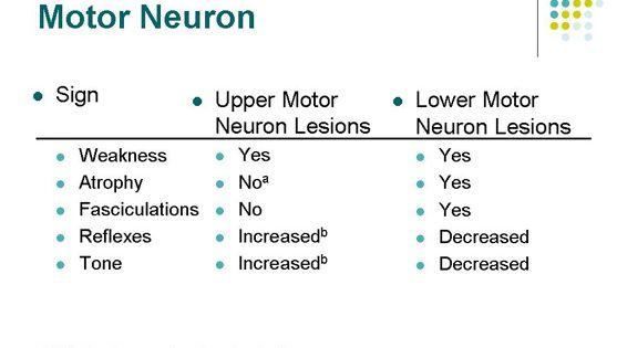 Upper motor neuron vs lower motor neuron google search for Lower motor neuron diseases