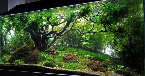 2013 Aga Aquascaping Contest Entry 311 Best I Ve Seen Science Nature At Repinned Net