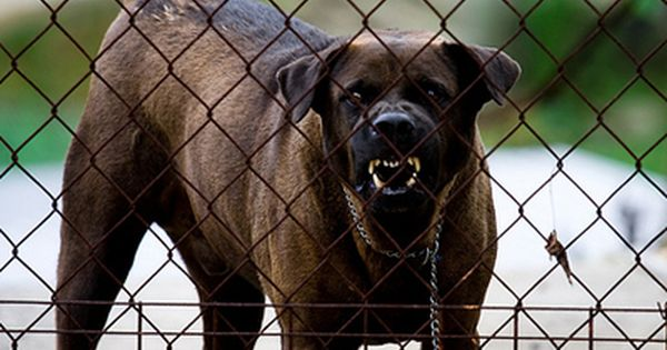 Roubini And Rosenberg The Dogs That Barked For A Bull Market Scary Dogs Dog Barking Dogs