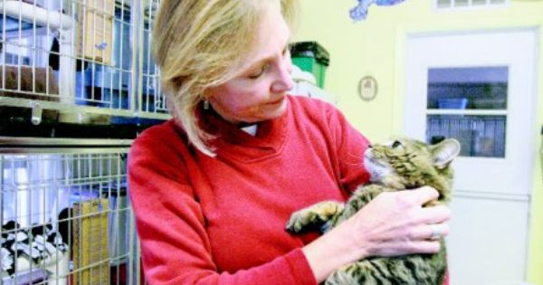 Laura Laita A West Suburban Humane Society Volunteer From Downers Grove Holds Thor A Cat Available For Downers Grove Animal Shelter Humane Society Volunteer