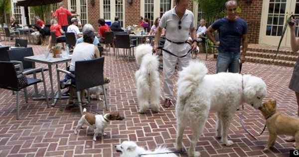 Dog Friendly Dining In D C Area Dog Friends Find Pets Dogs