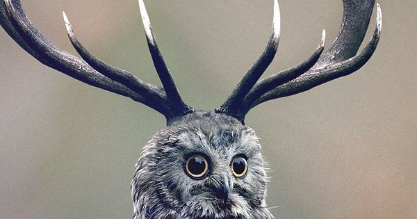 deer owl